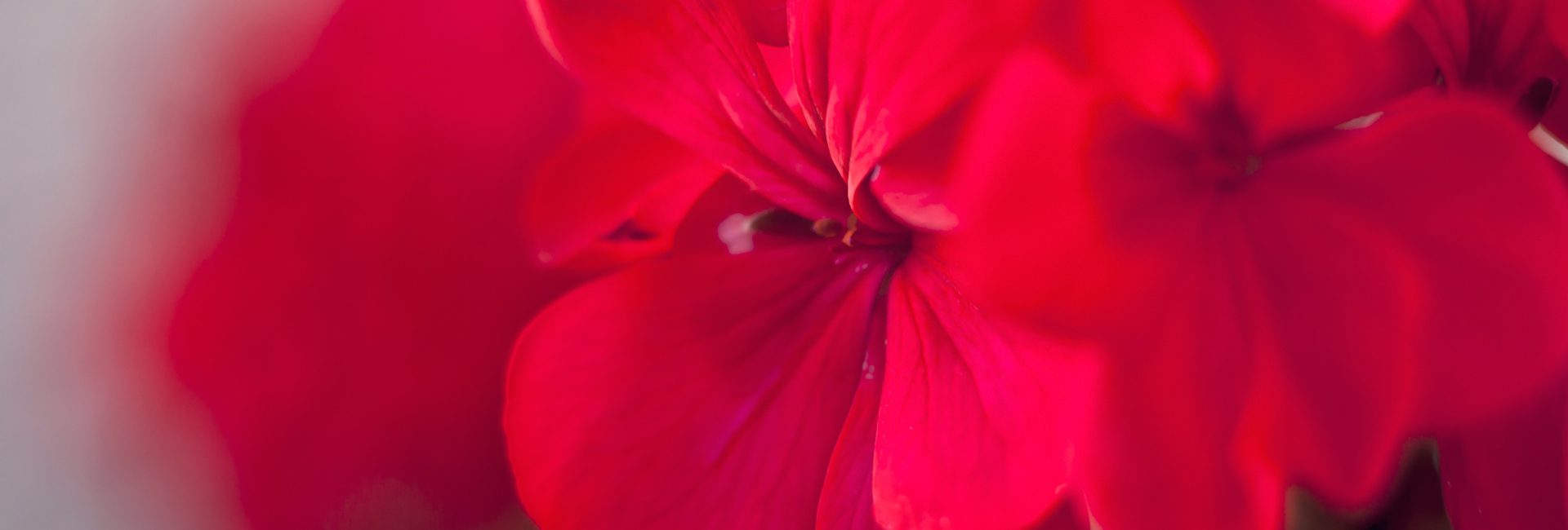 Gartenkalender Mai